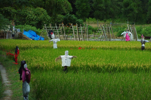 the scenery of scarecrows
