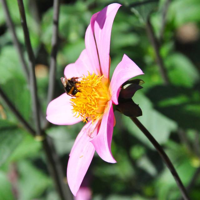 September 2020 ... Farbenfrohe Blüten im Kurpark Bad Herrenalb ... Brigitte StolleSeptember 2020 ... Farbenfrohe Blüten im Kurpark Bad Herrenalb ... Brigitte Stolle