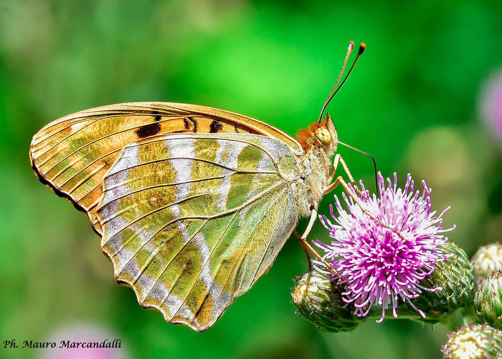 Flora e fauna dell'Adda 2