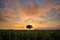 Lonely Tree, 台中九天夕陽之樹