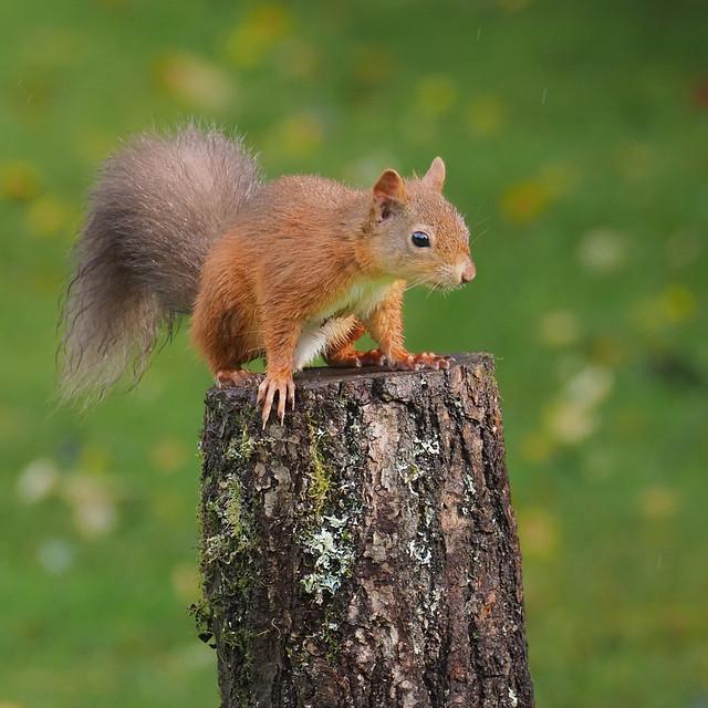 Soggy Squirrel