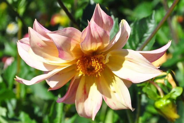 September 2020 ... Farbenfrohe Blüten im Kurpark Bad Herrenalb ... Brigitte Stolle