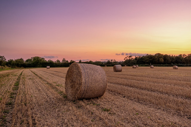 The Bales