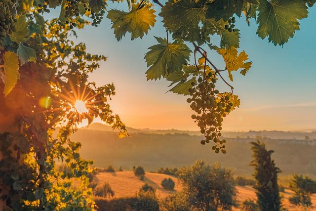 Provence Sunset
