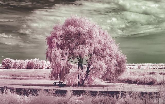 Infrared: Hidden sight