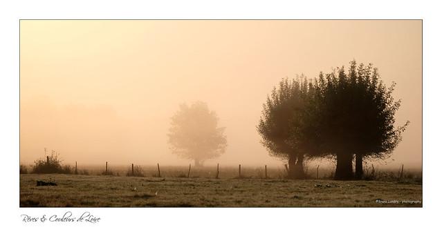Lumière matinale en bord de Loire