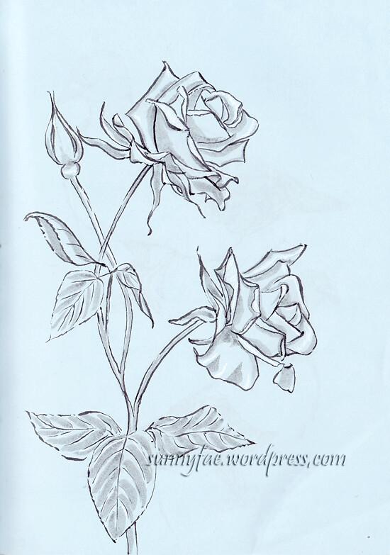 garden rose ink drawing
