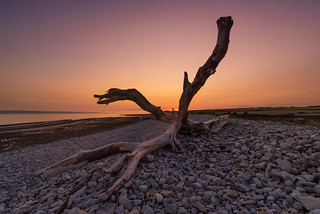 Driftwood el Grande! | by Welsh Photographer