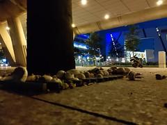 Urban 'shrooms #nightshot