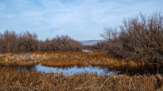 Klamath Wetlands