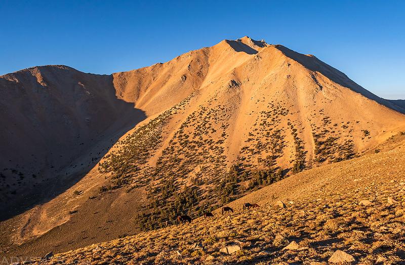 Wild Horses Below Boundary Peak