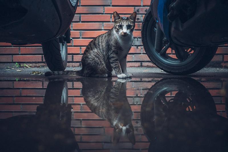 躲貓貓|GR3