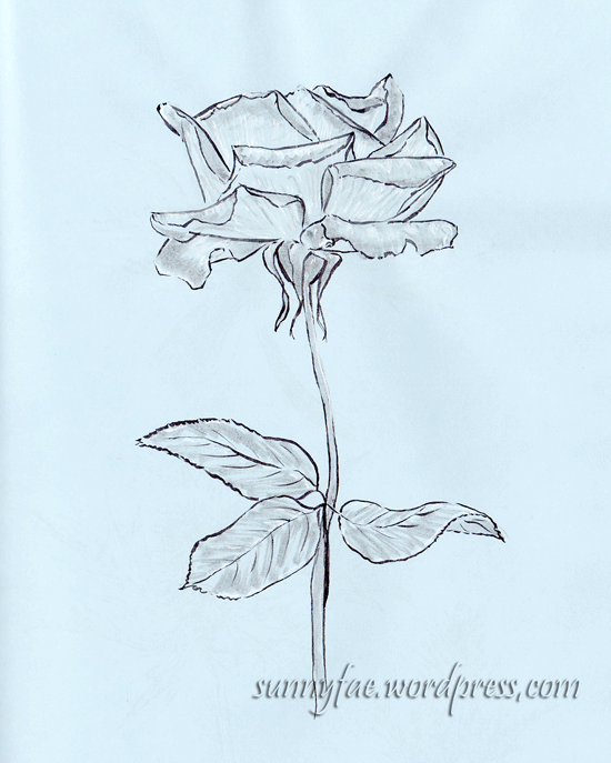 ink drawing of a rose