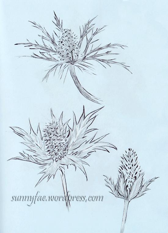 spiky sea holly