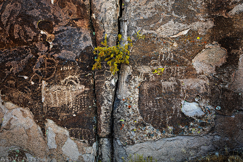 Sheep Petroglyphs