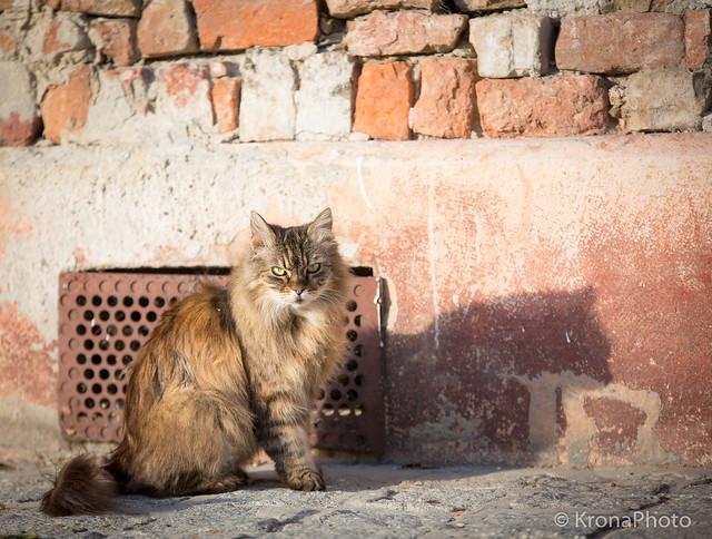 Sunset cat, Croatia