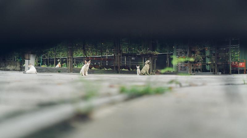 九寮溪|蔡司