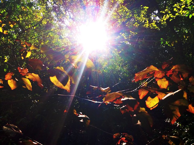 First glimpses of Autumn