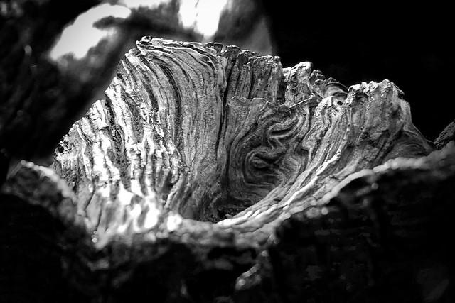 Beauty in the dead wood