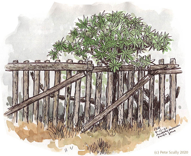 Pacific Grove fence