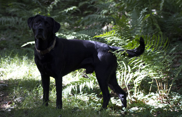 Dog in the woods