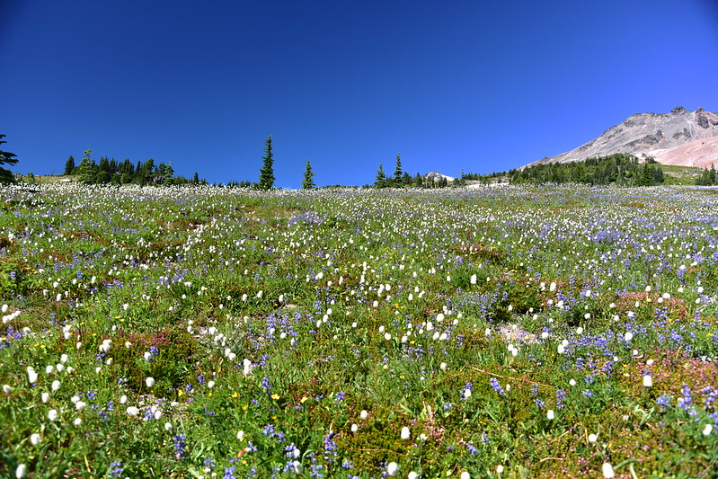Snowgrass Flat