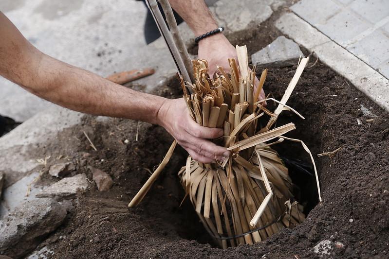 En el aniversario de barrio Alberdi, plantaron 250 árboles (1)