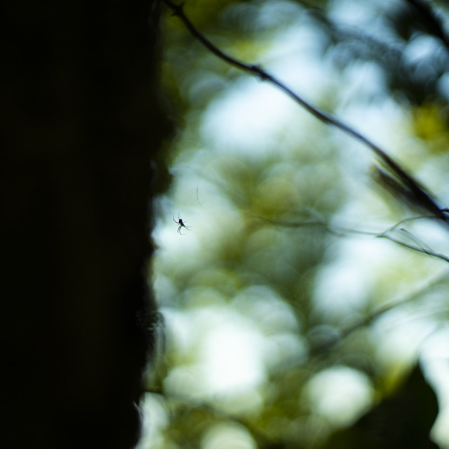 Little Spider in the Forest