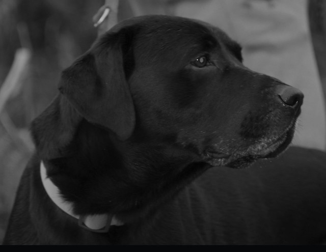 My dog black and white2