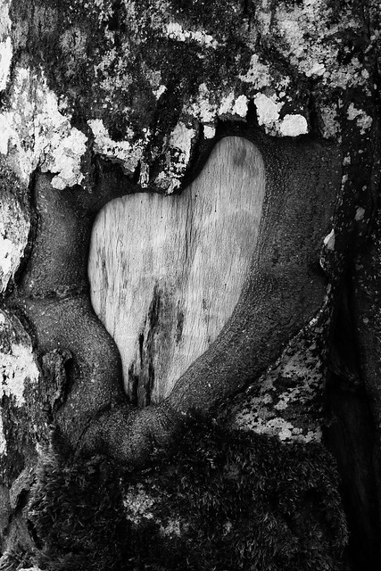 wooden heart of nature