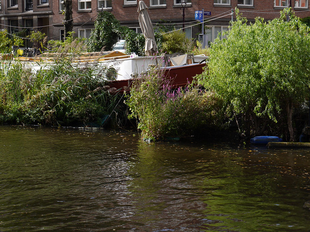 Houseboats in the canal in Amsterdam city, with floating willow islands around them; free photo, Fons Heijnsbroek