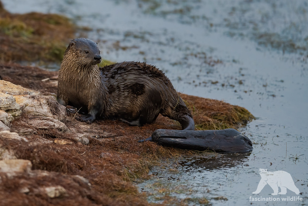 River Otter #explored