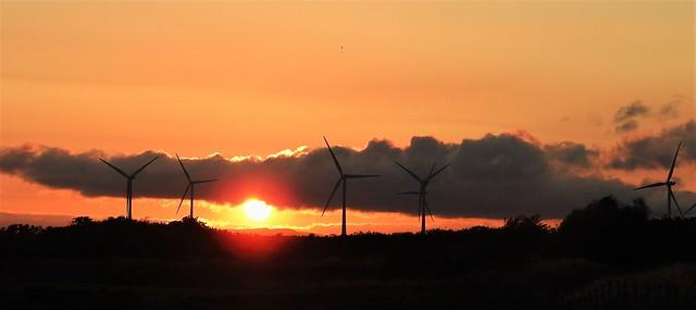 Panorama Sunset - Turbine Silhouettes (Explored)
