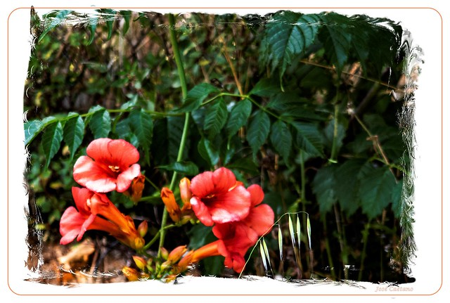 IMG_2259_Flowers