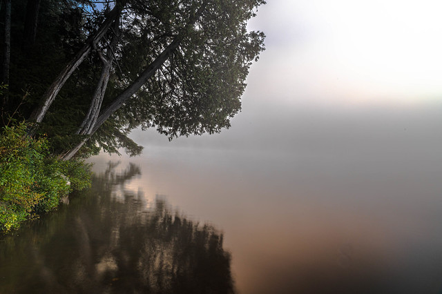 TREE ON FOGGY LAKE OF TWO RIVERS AT SUNRISE