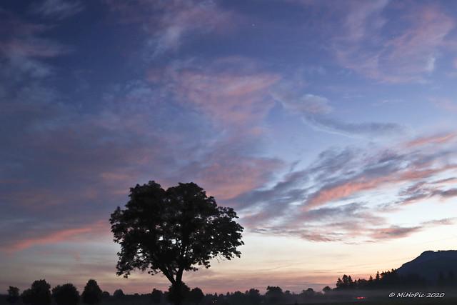 Single tree (explored 16.Sep 2020)