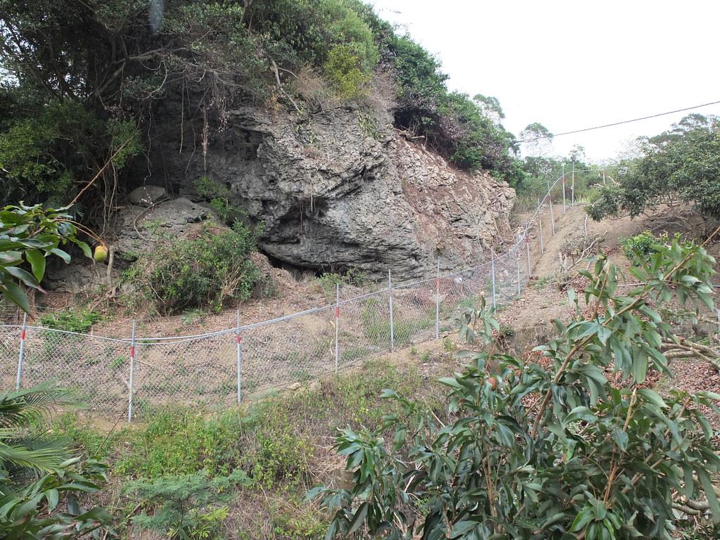 玉荷包果園常位於淺山坡地上或靠山的田區,如何有效架設電圍網也成為考驗。鄭雅云攝。