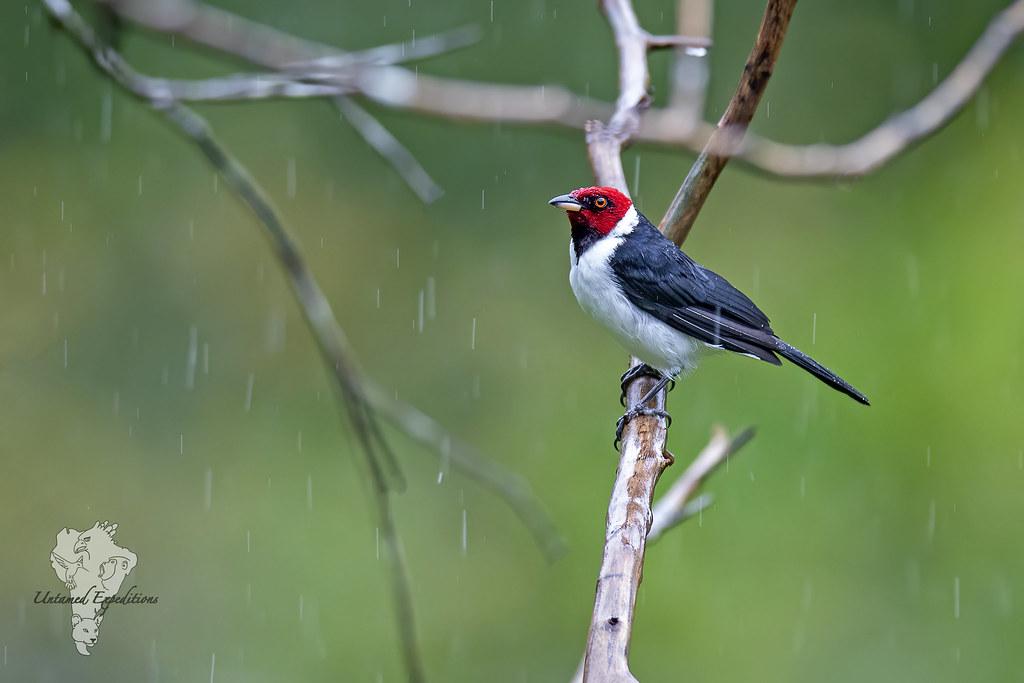 Amazonian Rains