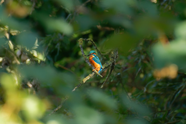 Moments | The Kingfisher