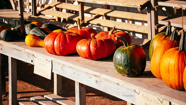 Colors of autumn...