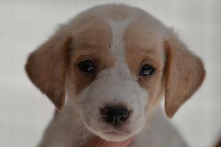 White Pup