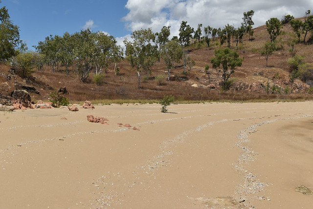 Beach and Eucalyptus platyphylla, Smedleys Cove, Townsville, QLD, 12/09/20