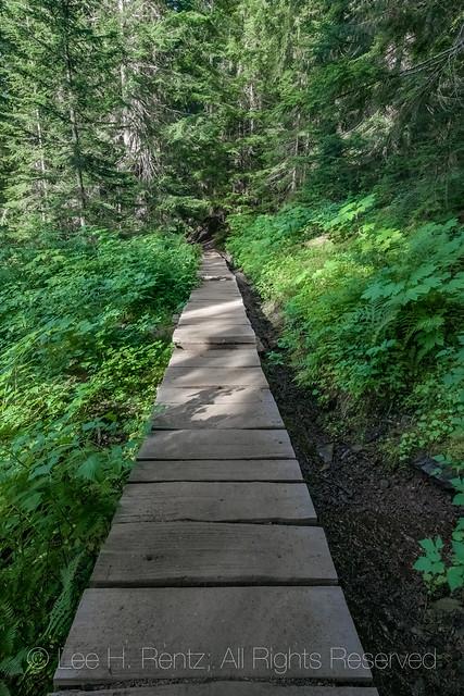 Boardwalk along the Heliotrope Ridge Trail