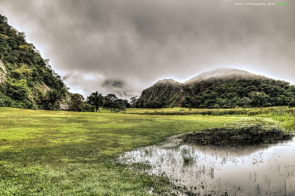 Niebla sobre la jungla