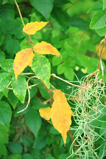 Leaves & moss