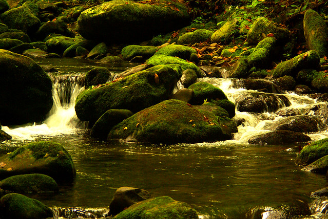 Early Fall Stream