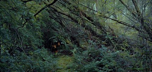 dumbarton scotland jungle trek trekking wild trees path chimpanzee green greenery forest woods nature hike survival landscape outdoor flora fauna welcome colour vivid art artwork