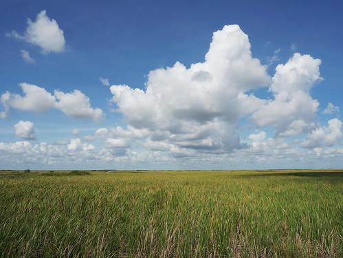 horizon everglades