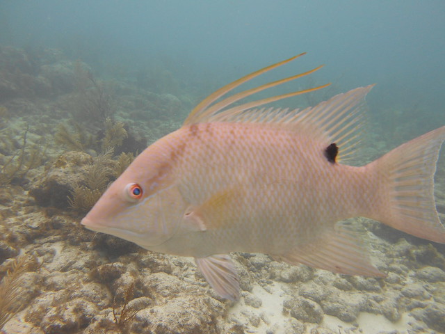 Florida Dive Report 16 Sept. PM 2020