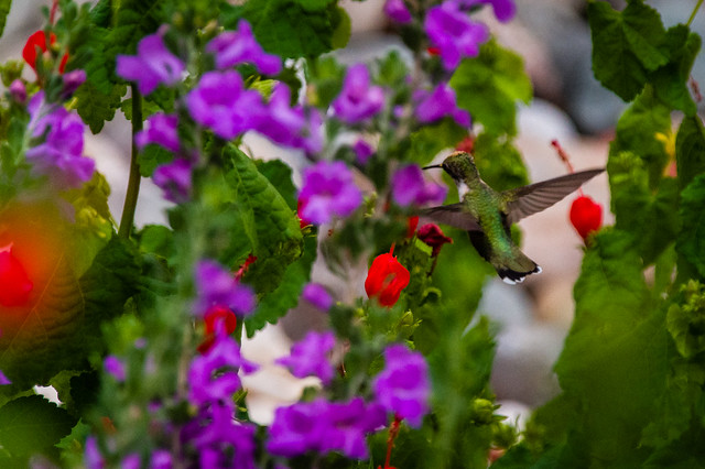 2020 Visions 9.11 ~ Ruby-throated Hummingbird